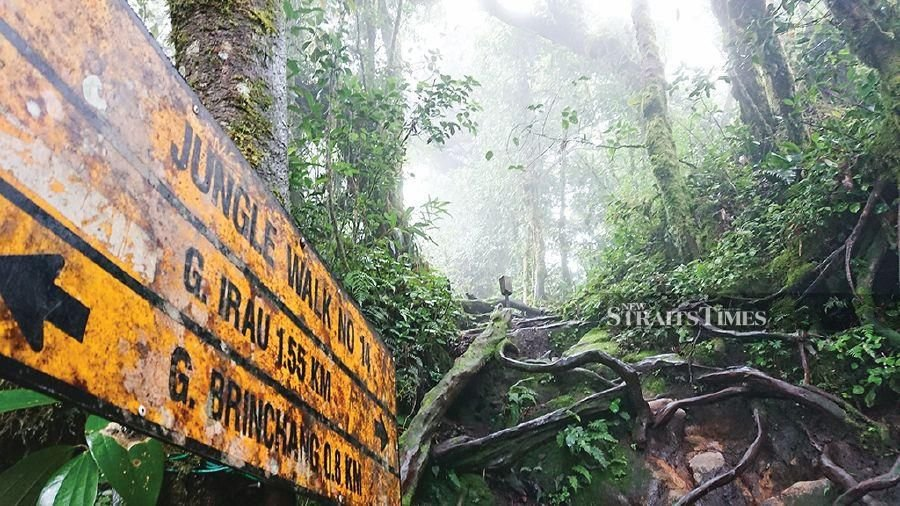 oldest forest in malaysia