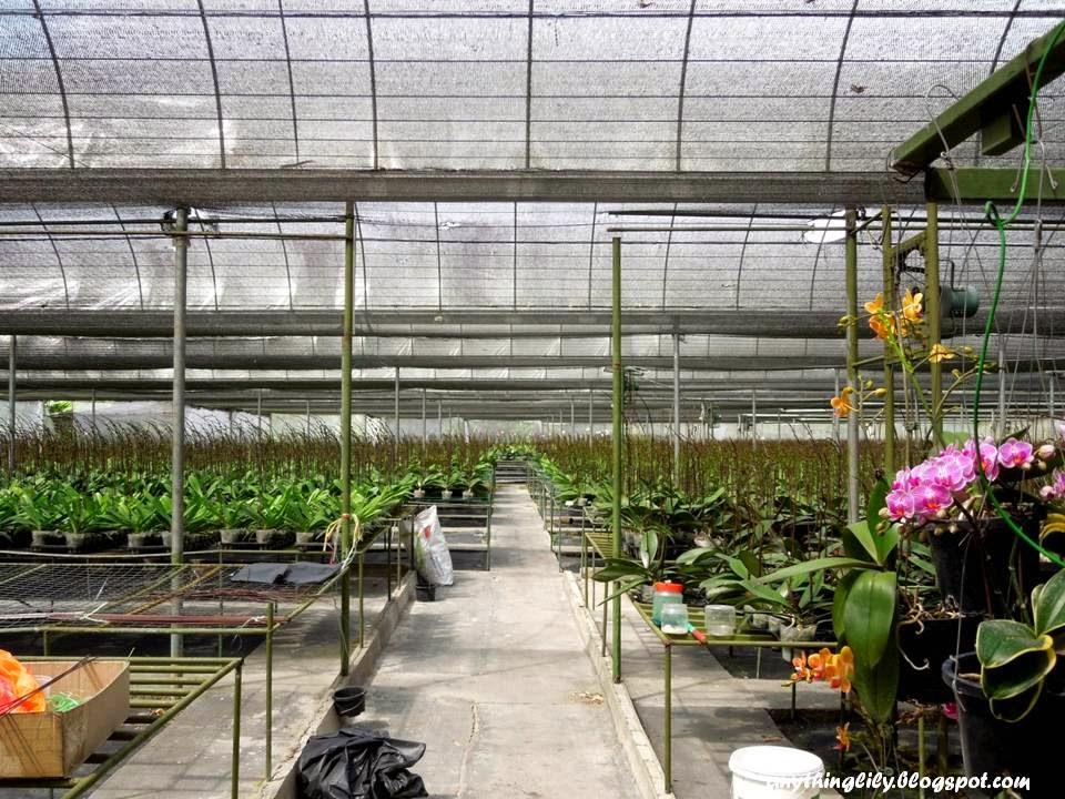Orchid Farm Genting Highland