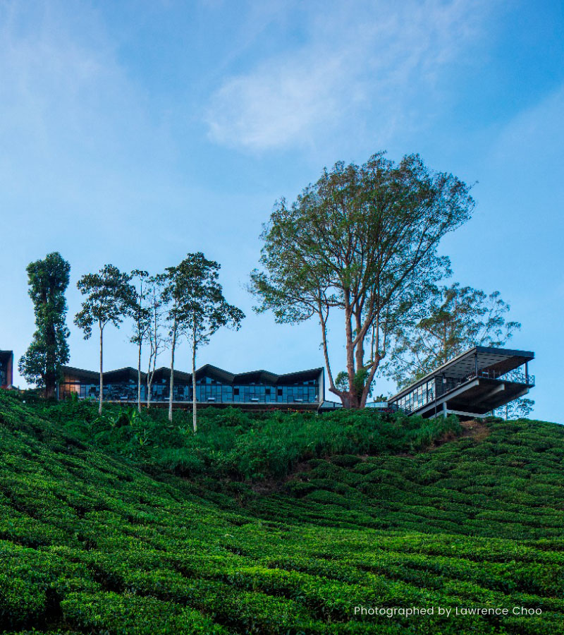 cameron highlands tourist guide