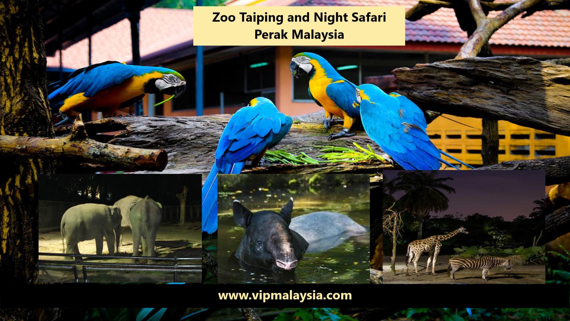 Zoo Taiping Night Safari Perak Malaysia